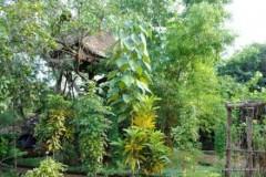 Gran Casa del Árbol